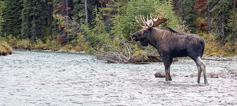 Photo of The Most Complete Guide On Moose Hunting