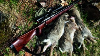 Photo of How To Choose A Rabbit Hunting Rifle?