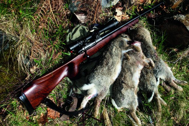 How To Choose A Rabbit Hunting Rifle