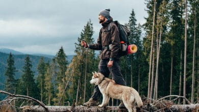 Photo of 10 Best Hiking Dogs