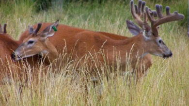 Photo of Five Myths to Dispel About Hunting Land