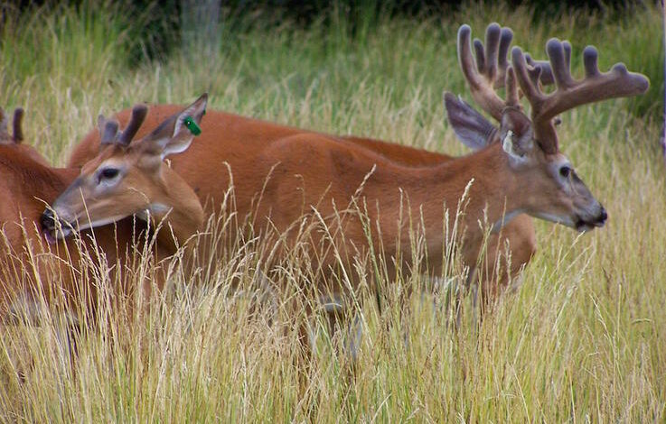 Five Myths to Dispel About Hunting Land